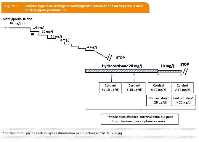 Usage des glucocorticoïdes synthétiques : effets secondaires en ...